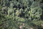 Oil palm plantation -- sabah_0424