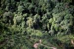 Oil palm plantation -- sabah_0425