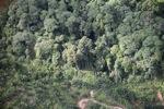 Oil palm plantation -- sabah_0426
