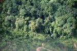 Oil palm plantation -- sabah_0427