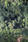 Oil palm plantation -- sabah_0428