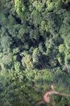 Oil palm plantation -- sabah_0429
