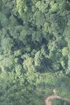 Oil palm plantation -- sabah_0430