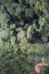 Oil palm plantation -- sabah_0431