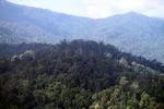 Borneo rainforest -- sabah_0434