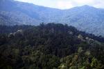Borneo rainforest -- sabah_0435