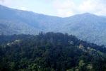 Borneo rainforest -- sabah_0437