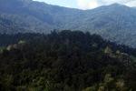 Borneo rainforest -- sabah_0439