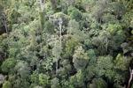 Borneo rainforest -- sabah_0440