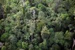 Borneo rainforest -- sabah_0441