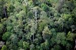 Borneo rainforest -- sabah_0442