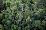 Borneo rainforest -- sabah_0444