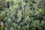 Borneo rainforest -- sabah_0446