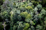 Borneo rainforest -- sabah_0448