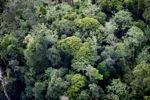 Borneo rainforest -- sabah_0450