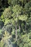 Borneo rainforest -- sabah_0451