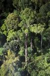 Borneo rainforest -- sabah_0452