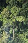Borneo rainforest -- sabah_0453