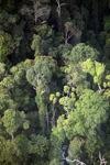 Borneo rainforest -- sabah_0455