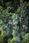 Borneo rainforest -- sabah_0456