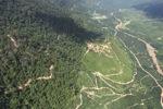 Oil palm plantation -- sabah_0458