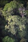 Borneo rainforest -- sabah_0460