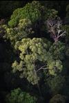 Borneo rainforest -- sabah_0461