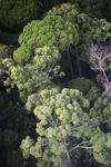 Borneo rainforest -- sabah_0462