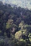 Borneo rainforest -- sabah_0463