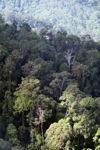 Borneo rainforest -- sabah_0464