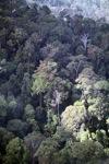 Borneo rainforest -- sabah_0465