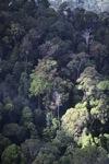 Borneo rainforest -- sabah_0466