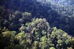 Borneo rainforest -- sabah_0468