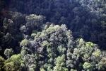 Borneo rainforest -- sabah_0471