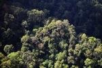 Borneo rainforest -- sabah_0473