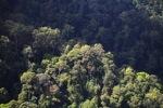 Borneo rainforest -- sabah_0474