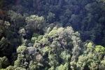 Borneo rainforest -- sabah_0476