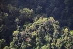 Borneo rainforest -- sabah_0477