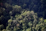 Borneo rainforest -- sabah_0478