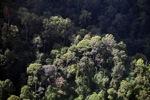 Borneo rainforest -- sabah_0479