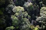 Borneo rainforest -- sabah_0480