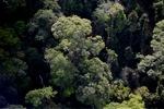 Borneo rainforest -- sabah_0481