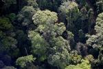 Borneo rainforest -- sabah_0482