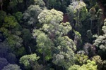 Borneo rainforest -- sabah_0483