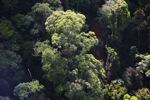 Borneo rainforest -- sabah_0484