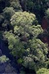 Borneo rainforest -- sabah_0485