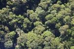 Borneo rainforest -- sabah_0486