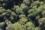 Borneo rainforest -- sabah_0487