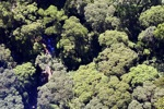 Borneo rainforest -- sabah_0488