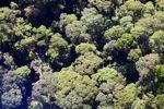 Borneo rainforest -- sabah_0489